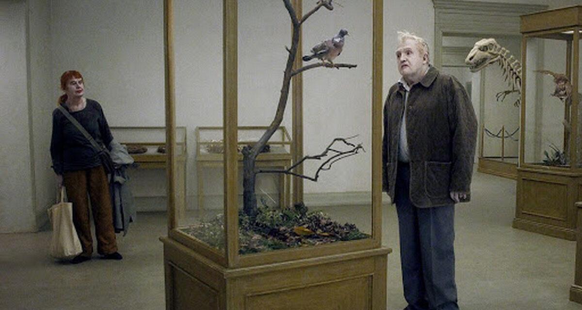 A Proposito di Un piccione seduto su un ramo riflette sull'esistenza – La Recensione